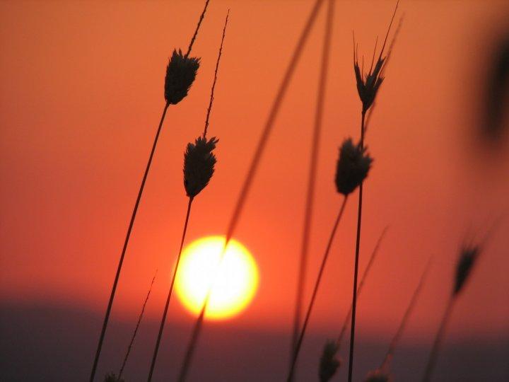 Sole del sud di flavia scisciot