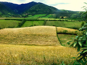 Photo: Along the path to the waterfall:  wheat field