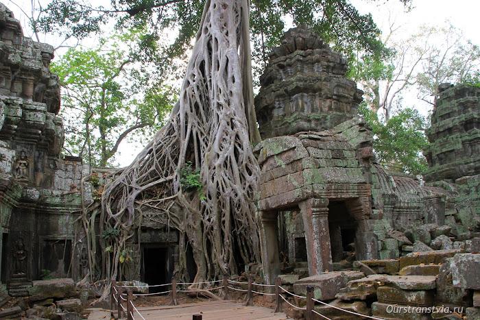 Деревья-душители в Та Пром, Ангкор