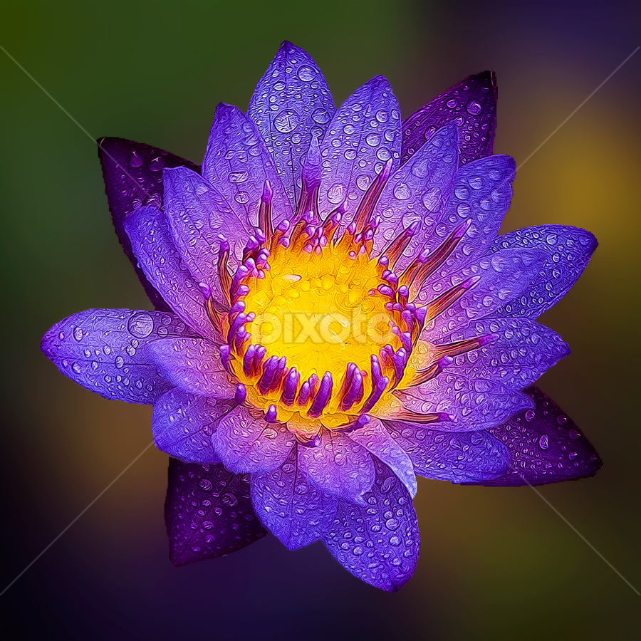 Hebring Lotus Blue  by TEDDY ZUSMA - Nature Up Close Flowers - 2011-2013