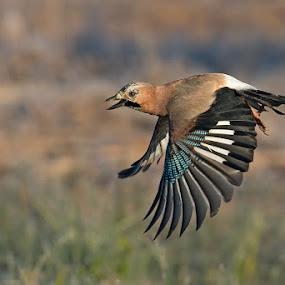 The flight by Alberto Carati - Animals Birds