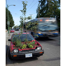 Photo: A car with a garden growing in it sits on a Vancouver...A car sits on the street with a garden growing where the engine should be in Vancouver, British Columbia August 30, 2010. The car is part of a program called The Stick Shift Project which is part of a collaborative urban transformation in which four cars have had their engines removed and a small garden planted. The cars have been parked in several locations around Vancouver and will remain throughout the summer. REUTERS/Andy Clark     (CANADA - Tags: SOCIETY ENVIRONMENT IMAGES OF THE DAY)