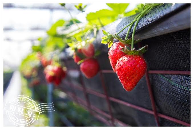 富森草莓園外觀