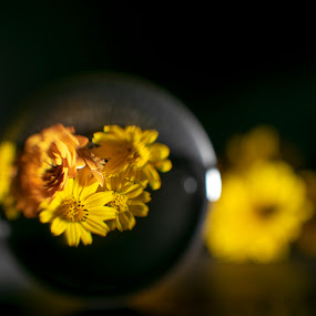 Daisies in a Crystal Ball by Jeri Curley - Artistic Objects Still Life