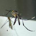 Purple Mosquito