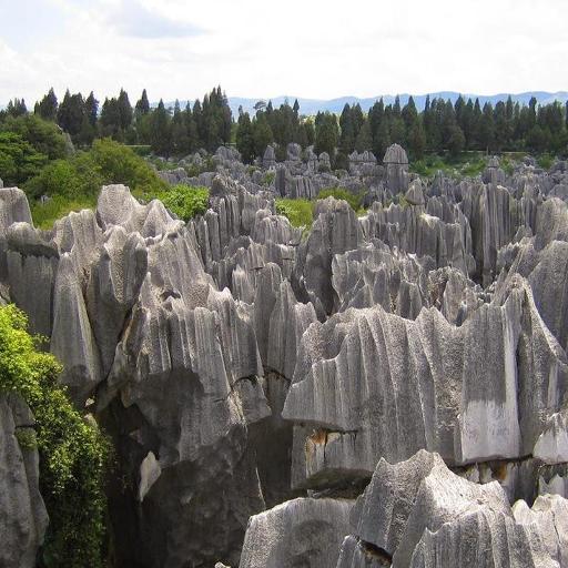 Stone Forest Of Madagascar