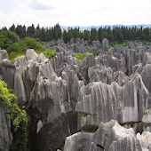 Stone Forest Of Madagascar