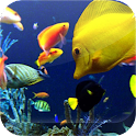 Sea Animals Live HD Wallpapers icon