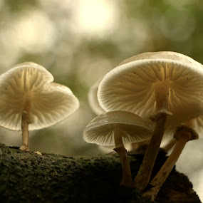 the tiny ones by Hilda van der Lee - Nature Up Close Mushrooms & Fungi ( fungi, autumn, forest, bokeh, light,  )