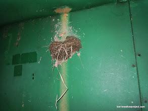 Photo: barn swallow nest inside the box car