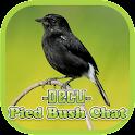 Pied Bushchat icon