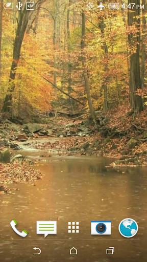 Autumn Rain Video Wallpaper