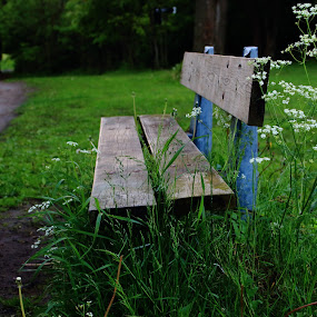 Bench in the park by Ansari Joshi - City,  Street & Park  City Parks ( bench, park, green, road, landscape,  )