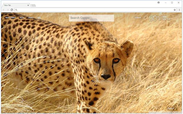 Cheetah Wallpaper HD New Tab Cheetahs Themes
