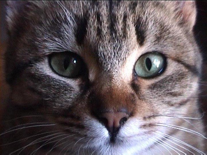 ...dolce ricordo. di akiram.cats