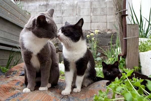 hai chú mèo