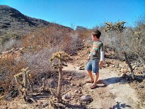 Photo: Clark Studies Cacti