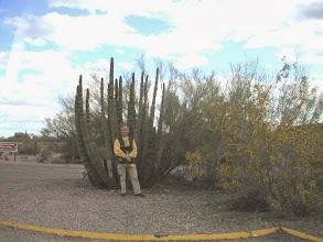 Photo: organ pipe NP Arizona