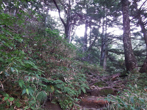 鬱蒼とした樹林帯へ