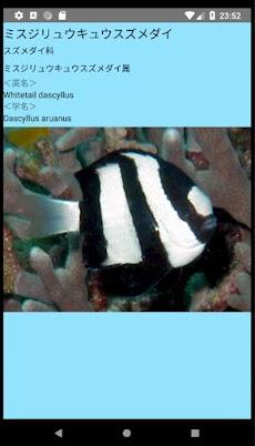 沖縄の魚図鑑のおすすめ画像5