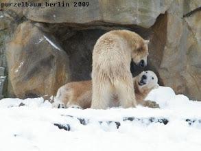 Photo: Spassbaerchen Knut und Gianna :-)