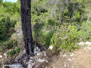 Photo: Just a l'entrada de la planura, a l'esquerra, al costat d'un pi es localitza una fita de pedres que ens indica la continuació del nostre itinerari
