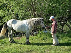 Photo: местные вятские лошадки ростом большим не отличаются