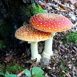 by Babica Slez - Nature Up Close Mushrooms & Fungi