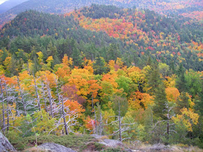 Photo: More colorful foliage.