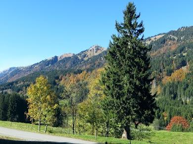Straße zum Parkplatz Ostertal, Buhls Alpe mit Blick auf Stuiben und Sederer Stuiben Allgäu Nagelfluihkette