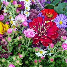 Before Florist by Helena Moravusova - Flowers Flower Arangements ( flowers )
