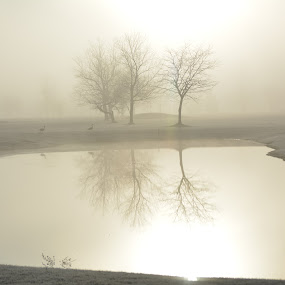 Fog at first light by Thomas Fitzrandolph - Landscapes Sunsets & Sunrises ( water, nature, fog, niagara county ny, trees, nikon d5200, sunrise, lockport ny,  )