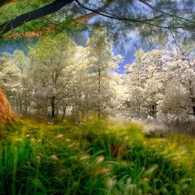 Just my imagination by Mohamad Sa'at Haji Mokim - Digital Art Places ( fantasy, infrared, normal, digital art, place )