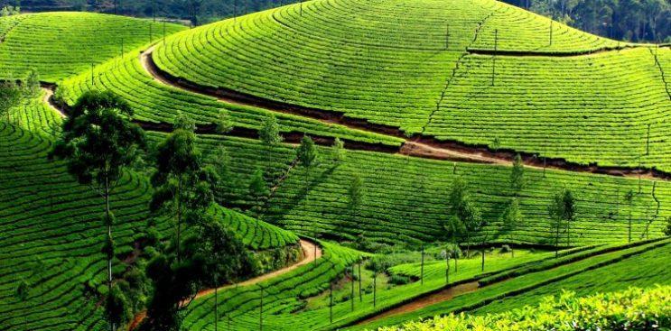 Image result for Pothamedu Viewpoint images