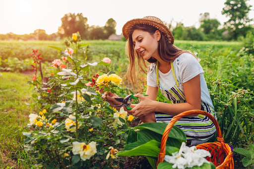Have a green thumb but no garden? AllotMe can help.