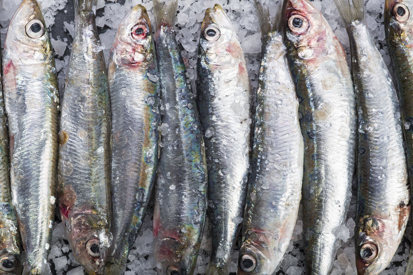 Manufacturer recalls 'unfit for consumption' 400g tins of Pilchards - TimesLIVE