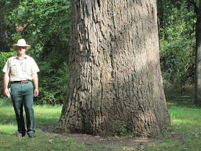 Photo: Courtney and his bur oak.... Actually, his two sons are listed as the nominators for this tree...
