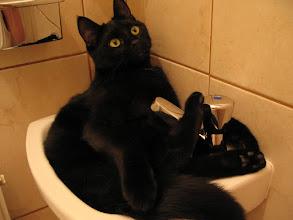 Photo: ist mal keine Kuschelhöhle zur Hand, tut es auch das Handwaschbecken (WC)