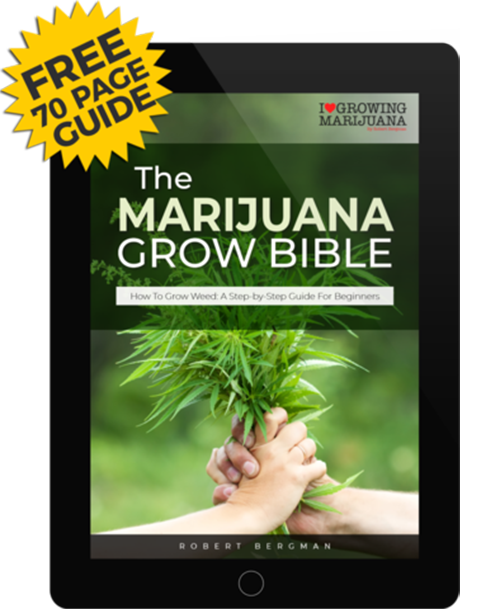 Grow your marijuana yourself