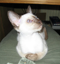 Photo: Echt een klein aapje, eigenlijk een kopie van onze vroeg gestorven Nikè