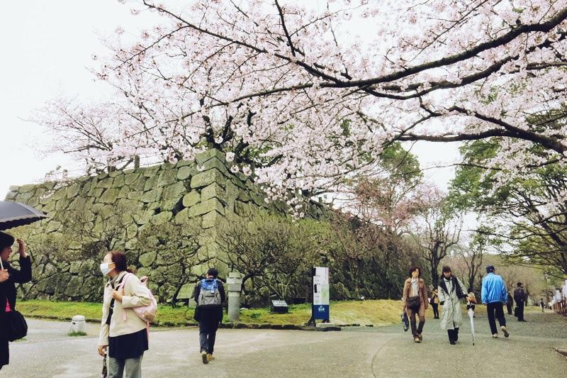 maizuru senior personals Meet thousands of beautiful single women online seeking men for dating, love, marriage in japan.