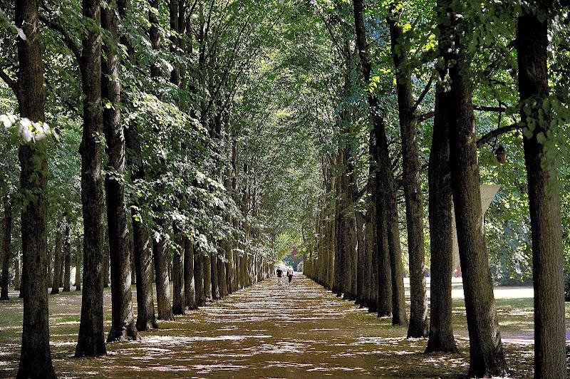 A passeggio nel viale di Isidoro.