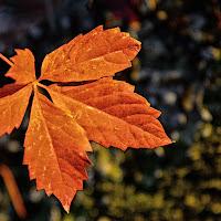 Fallen leaf di