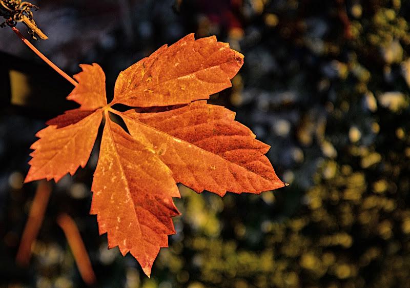 Fallen leaf di mcris