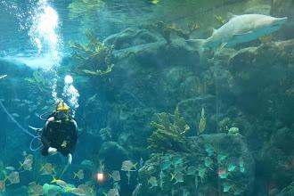 Photo: Florida Aquarium - haiden sekaan pääsee sukeltelemaan