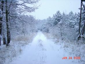 Photo: Winterwald