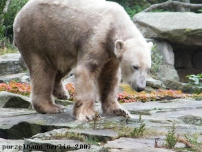 Photo: ... interessiert Knut doch sehr ;-)