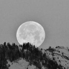 Super Moon by Kerry Demandante - Black & White Landscapes ( moon, super moon, black and white, trees, setting,  )