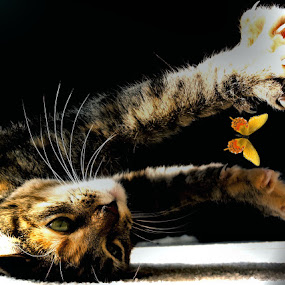 only if by Serenity Deliz - Animals - Cats Portraits ( cat, cute, stretching, kitty )