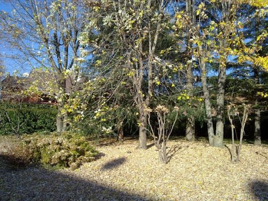 Giardino in Autunno di Pippino99